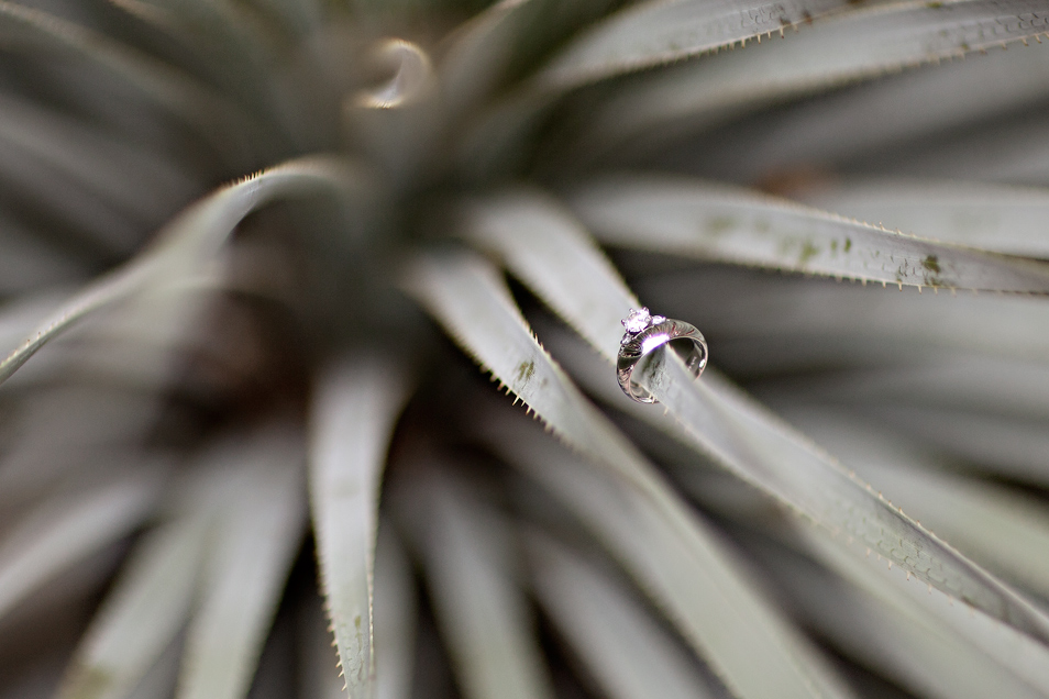 blog_rings